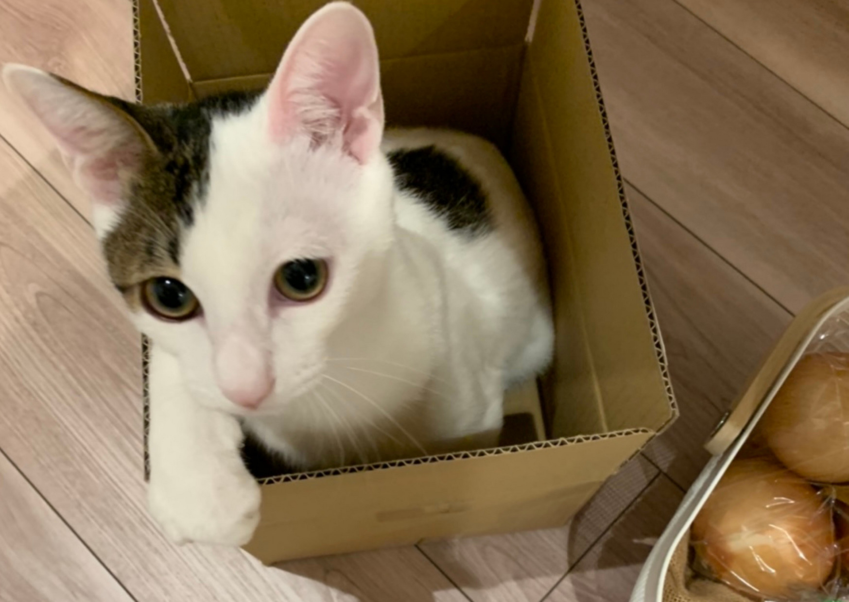 保護猫 引き取り方 条件