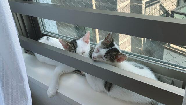 保護猫 家族 子猫