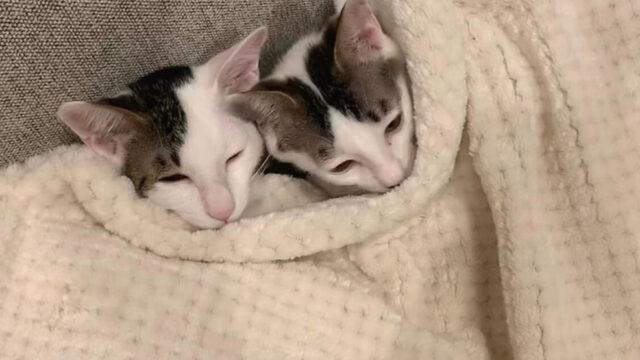 猫 一人暮らし 女